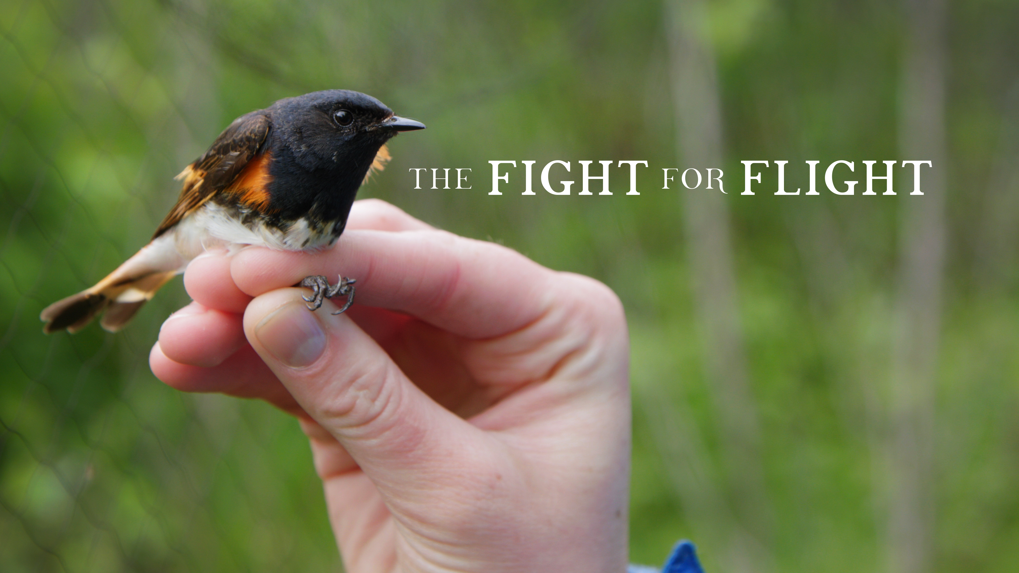 Photo du film : The fight for flight